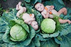 Niños pequeños que juegan en jardín con las zanahorias Fotografía de archivo libre de regalías