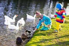 Niños que alimentan la nutria en parque del otoño Imágenes de archivo libres de regalías