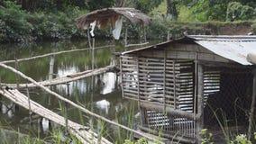 Nipa bamboo bridge and hut on fish pond. Bamboo hut and bamboo bridge inside man-made fish pond stock video footage