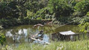 Nipa Bamboo foot Bridge and Hut on Fish Pond. Bamboo hut and bamboo foot bridge inside man-made fish pond stock footage