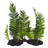 Nipa burtinii Plants Stock Photography