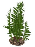 Nipa burtinii prehistoric plant - 3D render Stock Photos