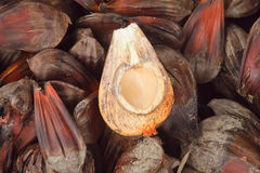 Nipa palm Stock Photography