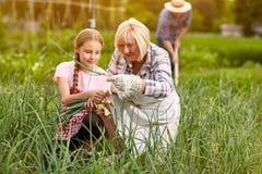 Nipote con la cipolla di raccolto della nonna Immagine Stock Libera da Diritti