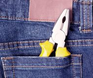 Nipper in blue jeans pocket Royalty Free Stock Photos