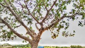 Nisargam Photographie stock libre de droits