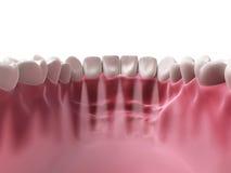 Niscy zęby Obraz Stock