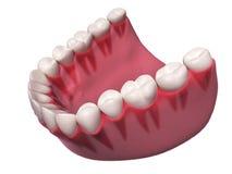 Niscy zęby Zdjęcia Royalty Free
