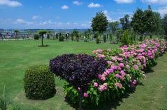 Nishat Garden scene in Srinagar-7. A lush green garden landscape in Kashmir with beautiful flowers Stock Photo