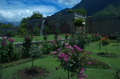 Nishat Garden scene in Srinagar-8. A lush green garden landscape in Kashmir with beautiful flowers Royalty Free Stock Images