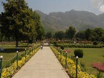 Nishat trädgård, Srinagar, Jammu & Kashmir Arkivfoto