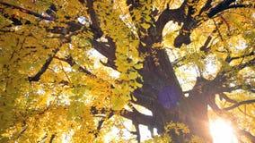Nishi Hongan -hongan-ji stock videobeelden
