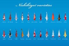 Nishikigoi variationer Royaltyfri Foto