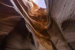 Niska antylopa, Arizona, usa zdjęcie stock