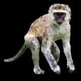 niska poli- małpa Fotografia Royalty Free