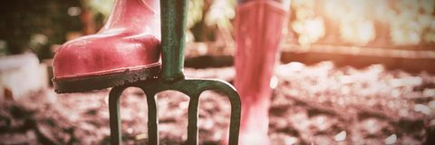 Niska sekcja jest ubranym różową gumowego buta pozycję z ogrodnictwa rozwidleniem na brudzie kobieta zdjęcia royalty free