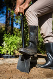 Niska sekcja mężczyzna głębienia ziemia z łopatą w ogródzie zdjęcie royalty free