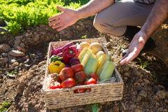 Niska sekcja mężczyzna z koszem świezi warzywa Obraz Royalty Free