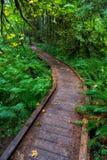 Niski drewniany most postępuje jako ślad zgina z lewej strony w Hoh lesie tropikalnym obraz stock