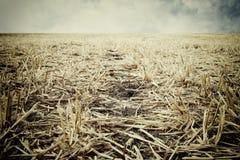 Niski kąt sucha trawa globalne ocieplenie pojęcia Obraz Stock