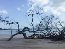 Niski przypływ i Bezlistni drzewa Obrazy Stock