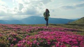 Niskiego kąta strzał atrakcyjny żeński backpacker szczęśliwie biega w dół kwitnącego halnego wzgórze Różowa góra zdjęcie wideo