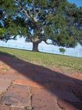Niskiego kąta widok drzewo obrazy stock