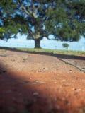 Niskiego kąta widok drzewo obrazy royalty free