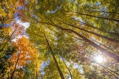 Niskiego kąta widok duży drzewo zdjęcie royalty free