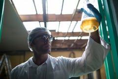 Niskiego kąta widok egzamininuje piwo w fabryce naukowiec obraz royalty free