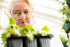Niskiego kąta widok egzamininuje rośliny żeński naukowiec fotografia royalty free