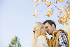 Niskiego kąta widok pary całowanie przeciw jasnemu niebu podczas jesieni Fotografia Stock