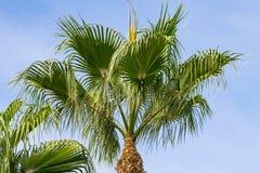 Niskiego kąta widok tropikalny drzewko palmowe zdjęcie stock