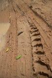 Niskiego kąta widoku pionowo CU dżungli błotnista droga z knobbed opona śladami i kałuża ostrzymy na lewicie zdjęcie stock