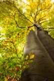 Niskiego kąta widok wielcy drzewa Obraz Stock