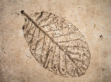 Niskiej ulgi liść na cemencie Fotografia Royalty Free