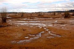 Nisqually rezerwat dzikiej przyrody Obraz Stock