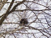 Nisten Sie auf einem Baum in einem Stadtpark Lizenzfreie Stockfotos