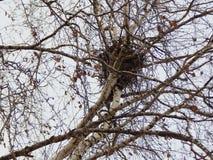 Nisten Sie auf einem Baum in einem Stadtpark Lizenzfreies Stockfoto