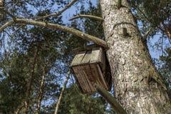 Nistkasten in einem Tannenbaum Lizenzfreie Stockbilder
