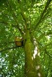Nistkasten im Baum Stockbild