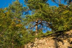 Nistkasten im Baum Lizenzfreie Stockfotografie
