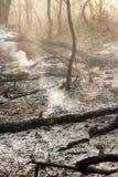 Niszczący palić tropikalnego las fotografia stock