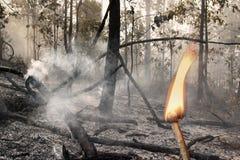 Niszczący paleniem lasowym obraz royalty free