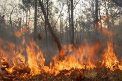 Niszczący palić tropikalnego las fotografia royalty free