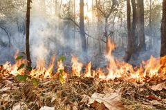 Niszczący palić tropikalnego las obraz royalty free