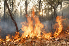 Niszczący palić tropikalnego las obraz stock