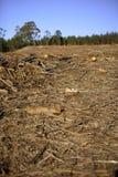 niszczenie lasów obraz royalty free