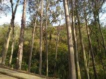 Niterà ³ i natuurreservaat Stock Foto's