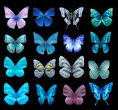 Nith butterfly Stock Image